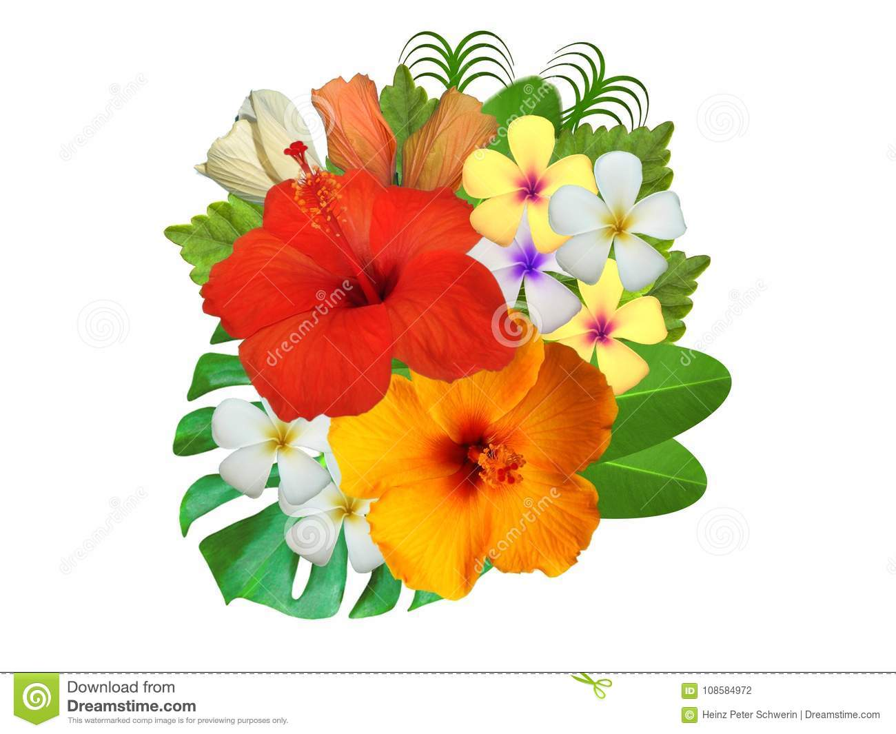 Hibiscus Flowers In Different Colors Stock Photo Image Of Bump