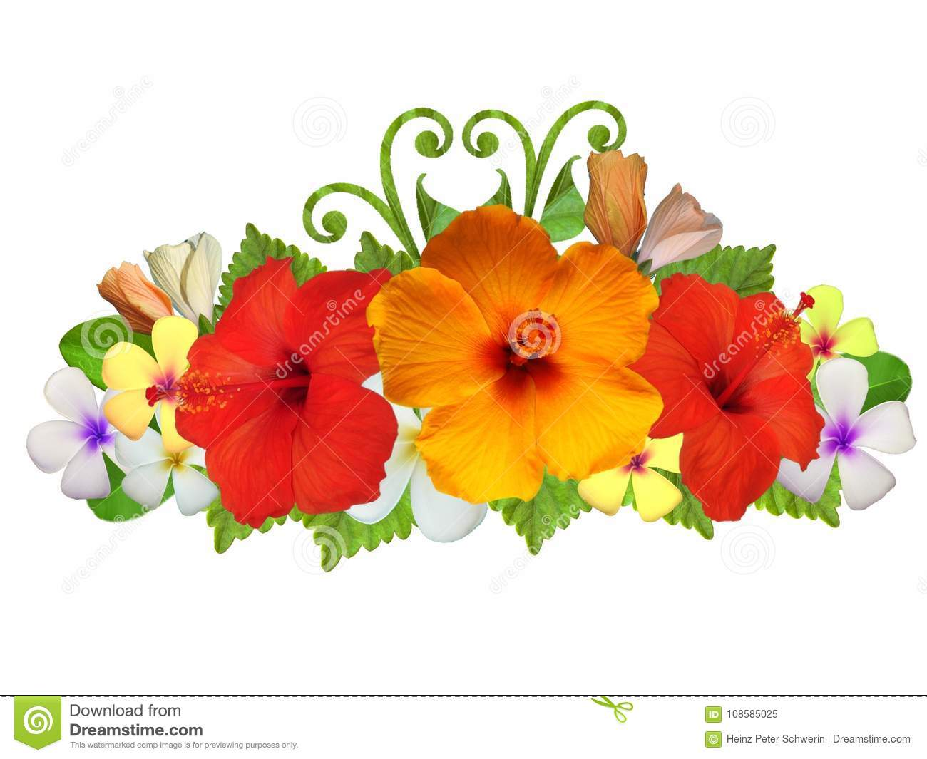 Hibiscus Flowers In Different Colors Stock Image - Image of chinese ...