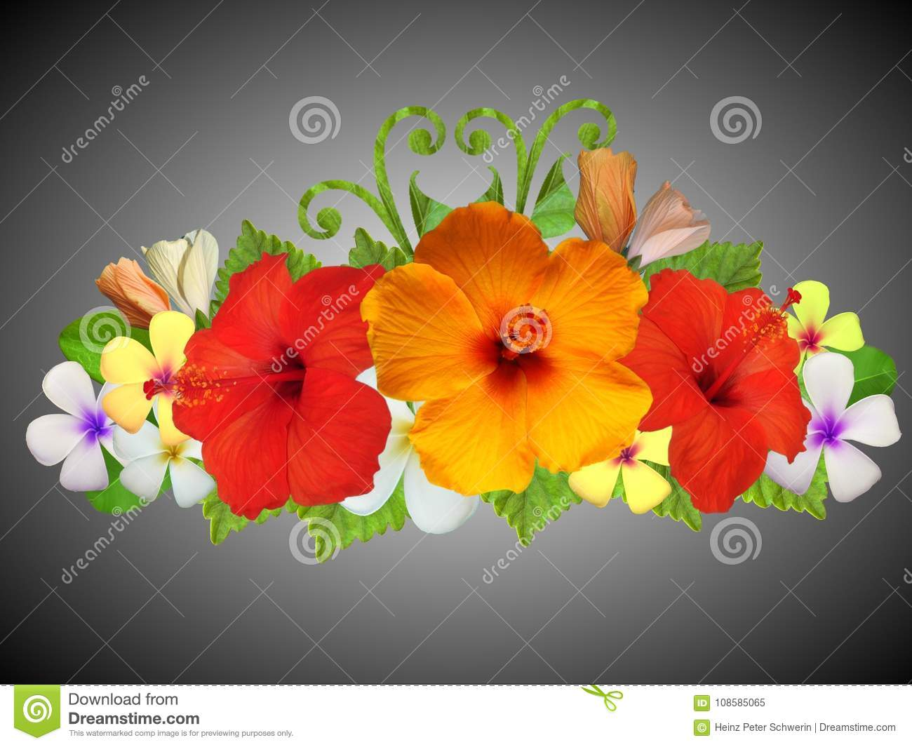 Hibiscus Flowers In Different Colors Stock Image Image Of Bump
