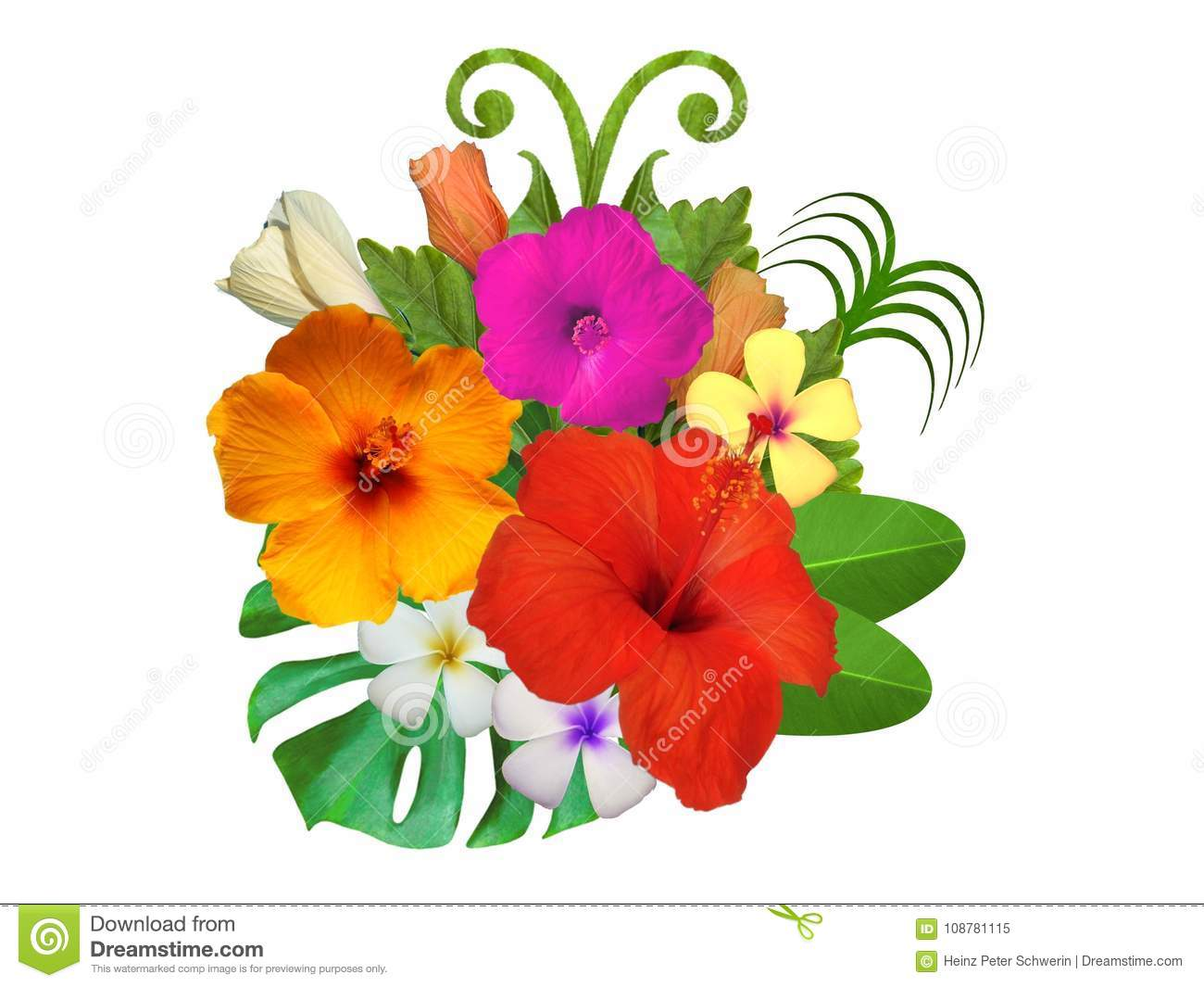 Hibiscus Flowers In Different Colors Stock Image Image Of Carib