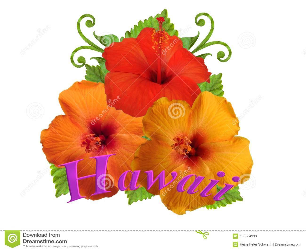 Hibiscus Flowers In Different Colors Stock Photo - Image of rosemary ...