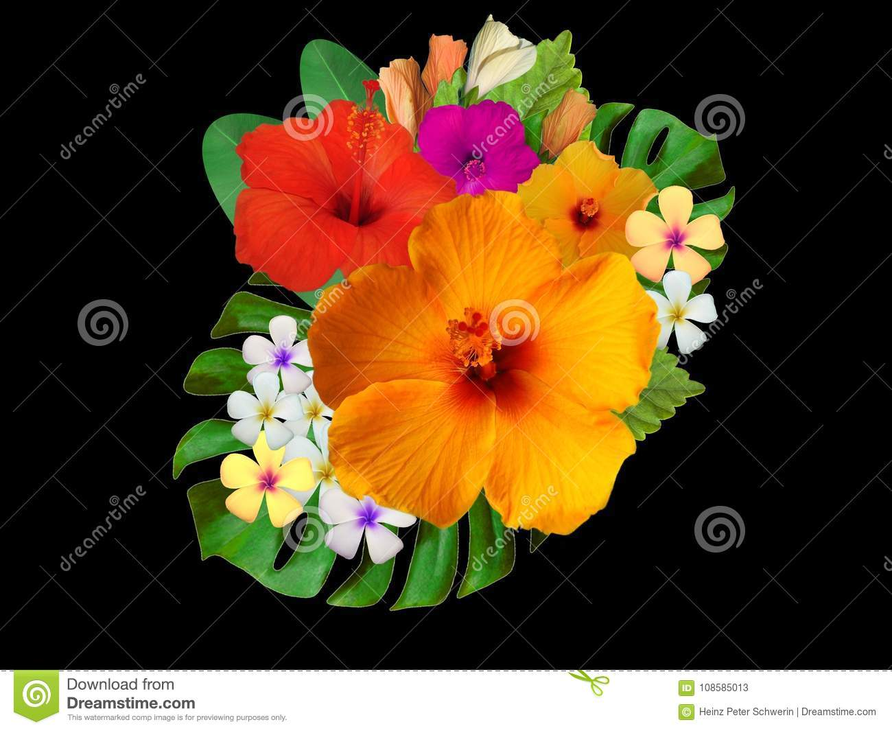 Hibiscus Flowers In Different Colors Stock Image Image Of Asia