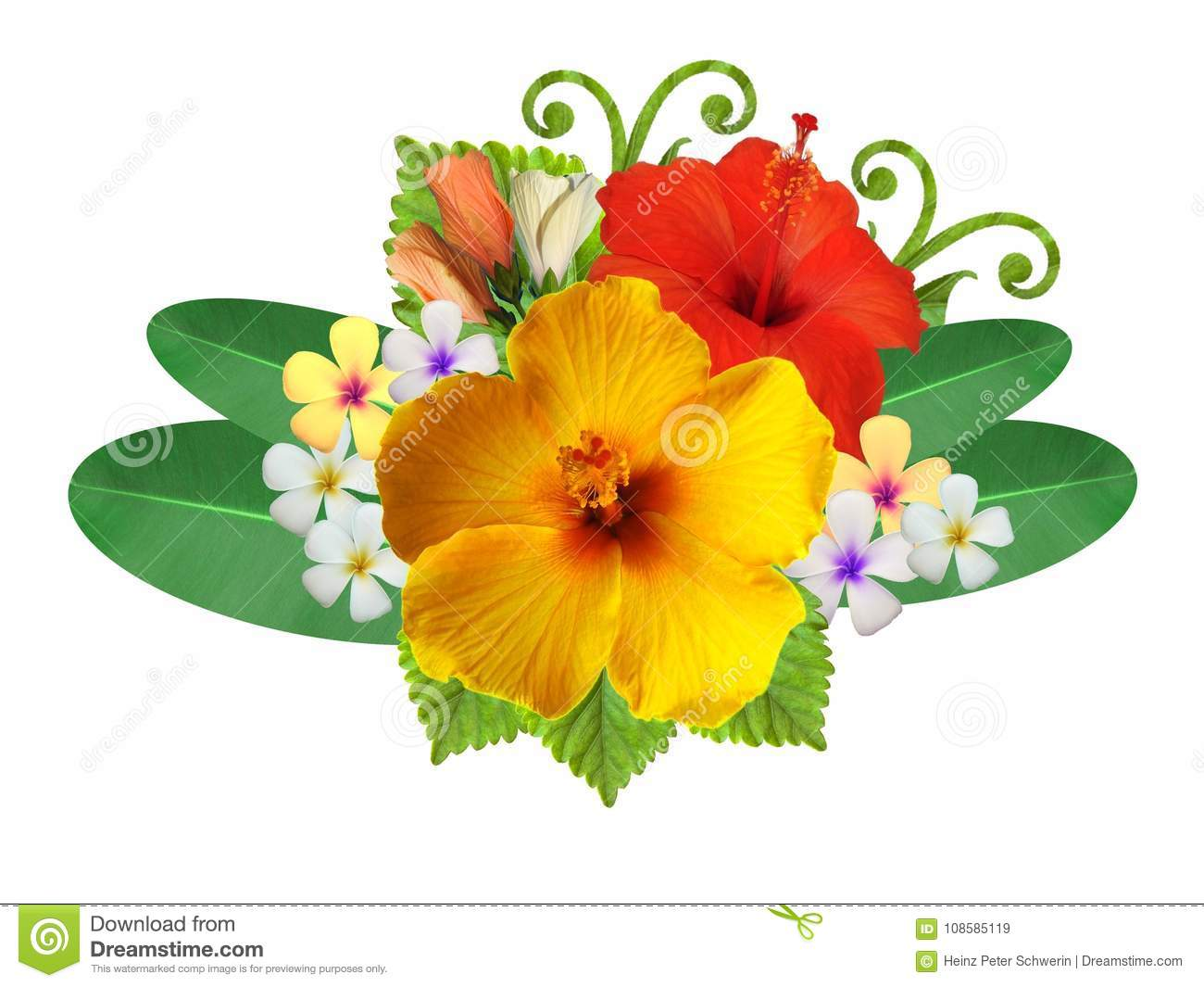 Hibiscus Flowers In Different Colors Stock Image Image Of Foliage