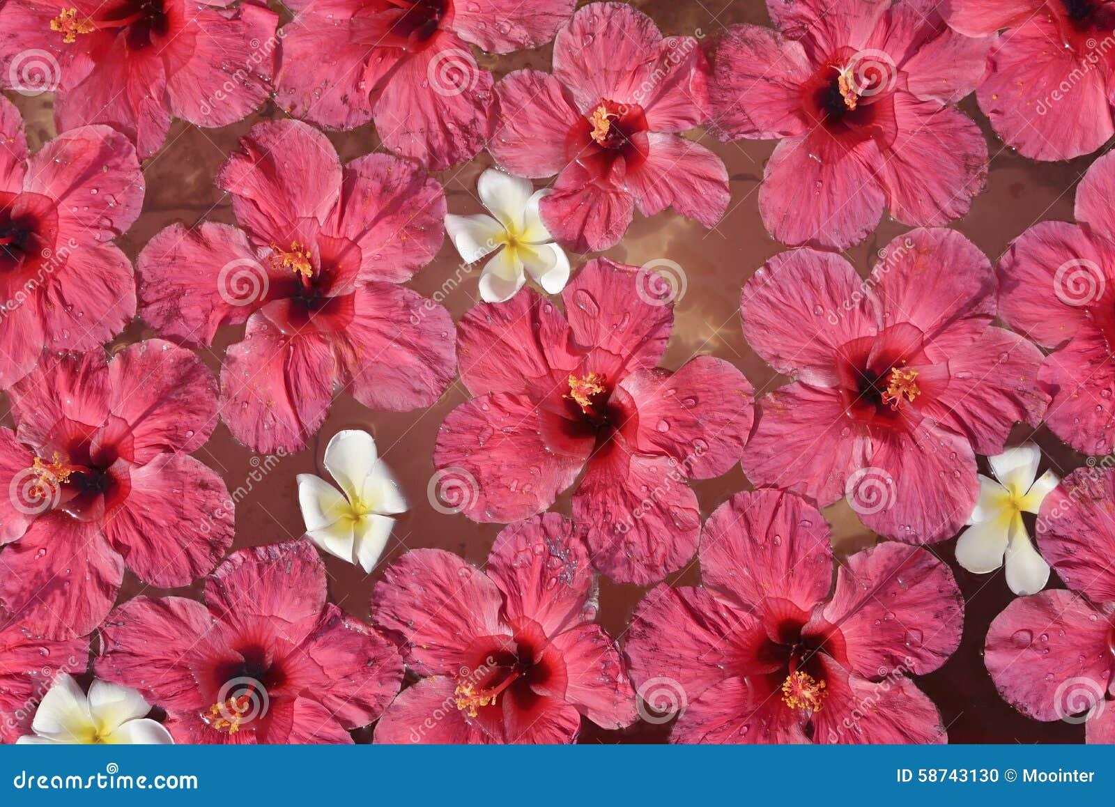 Hibiscus Flowers Stock Photo Image Of Ripple Romance 58743130