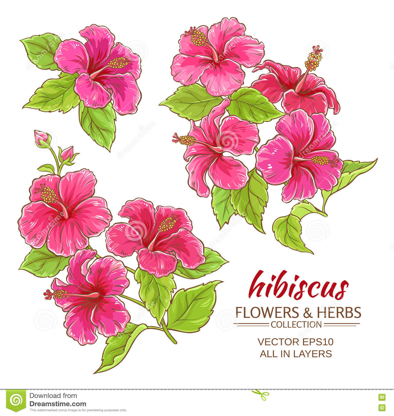 Hibiscus Flowers Vector Set Stock Vector Illustration Of Cartoon