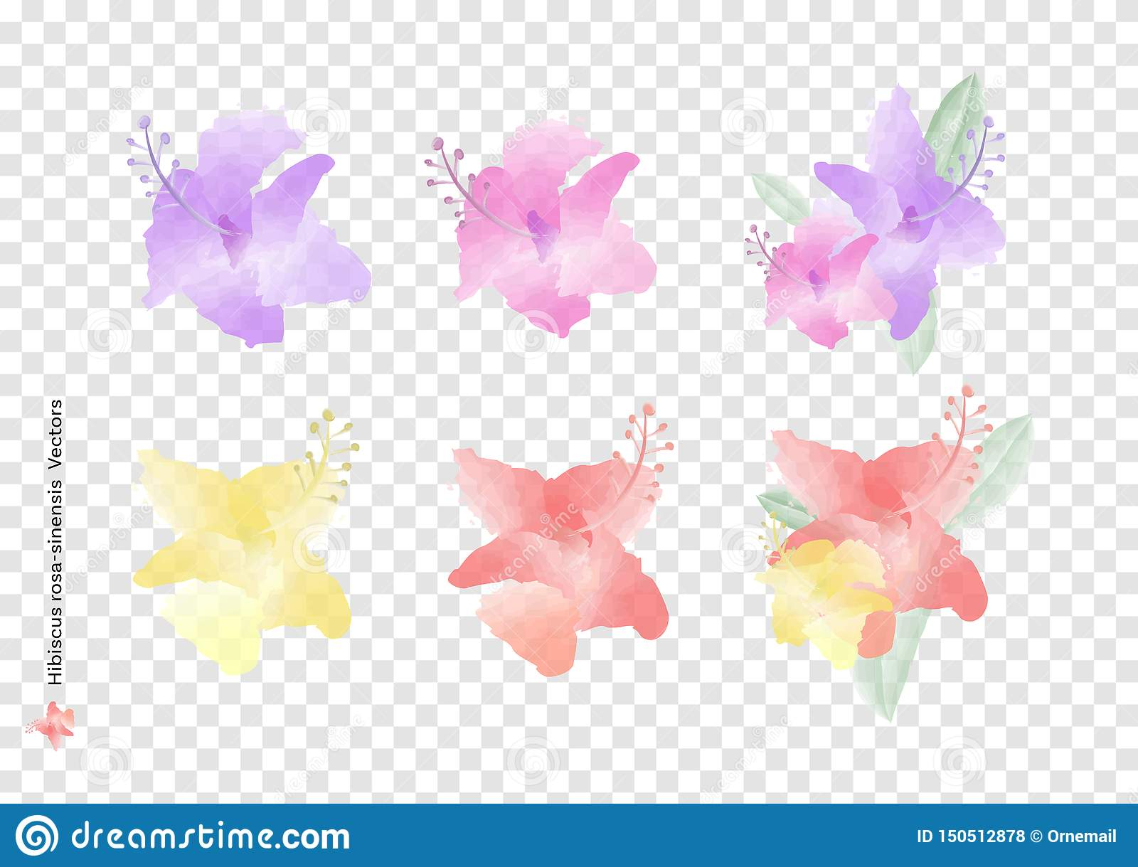 Hibiscus rosa sinensis flowers vectors and leaves with watercolor brush isolated on transparency background, beautiful floral elem