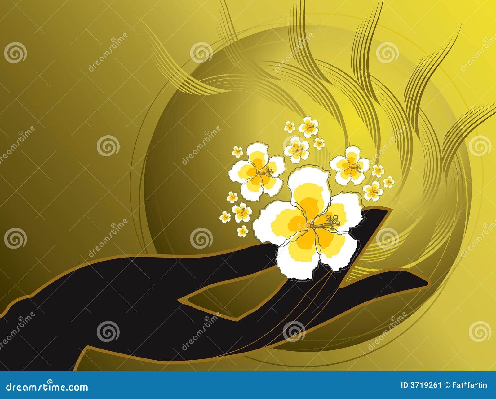 Hibiscus s χεριών του Βούδα λευκ