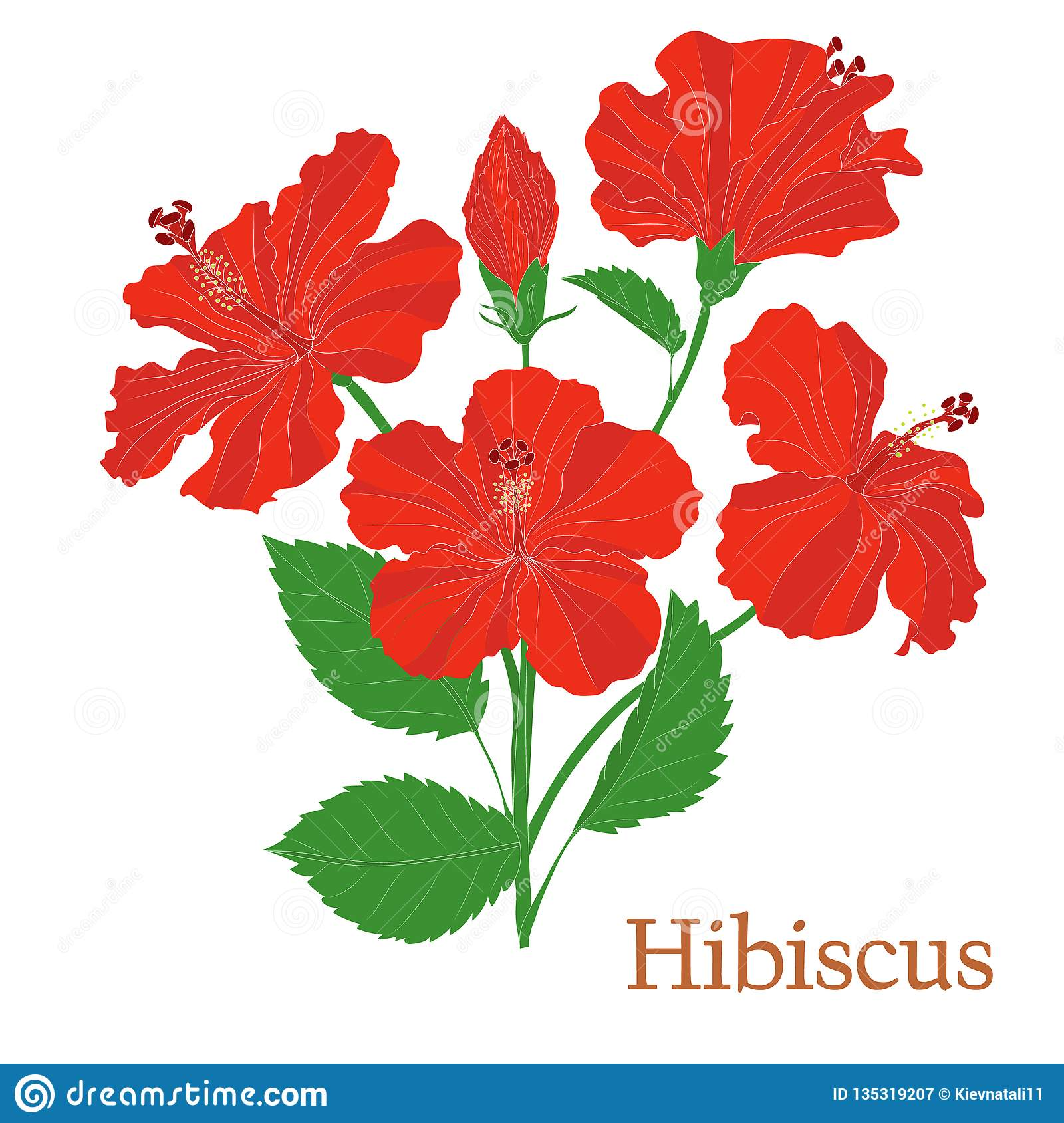 Hibiscus Tea Illustration Of A Plant In A Vector With Flowers For