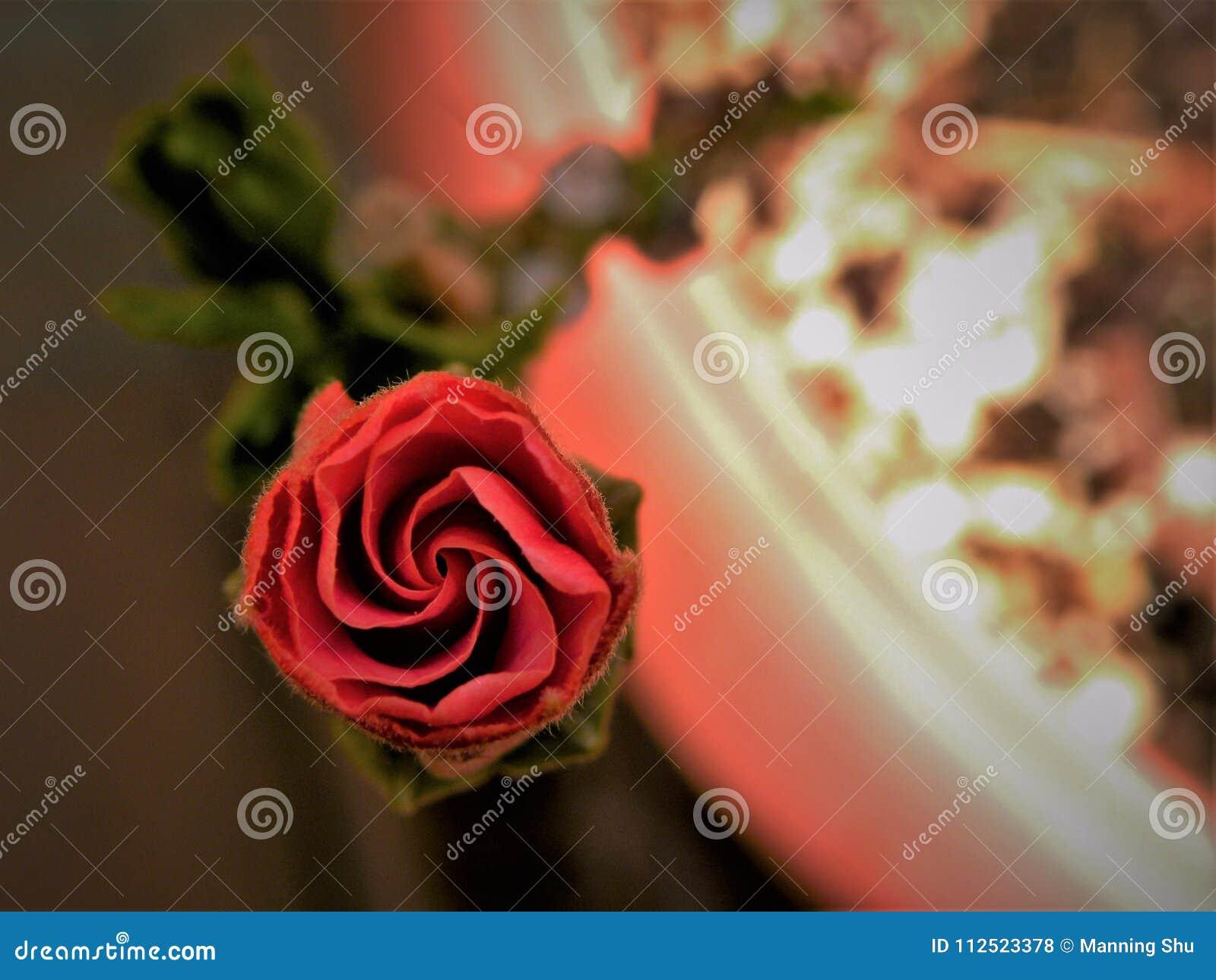 Hibiscus vermelho Bud Spiral