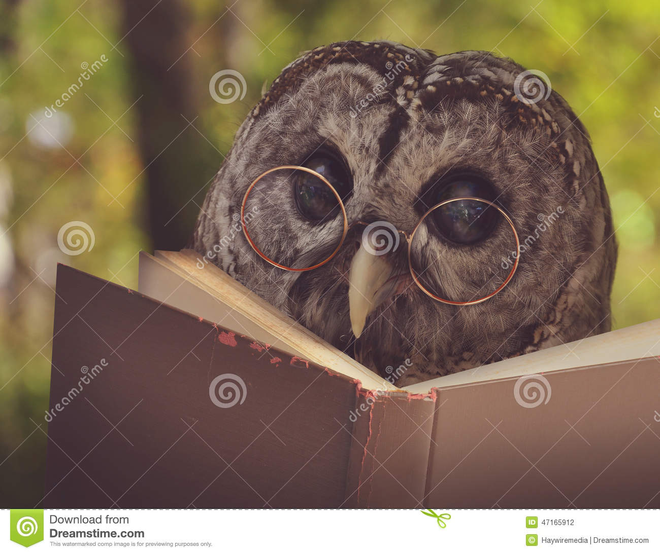 Book Subscription For Kids Owl