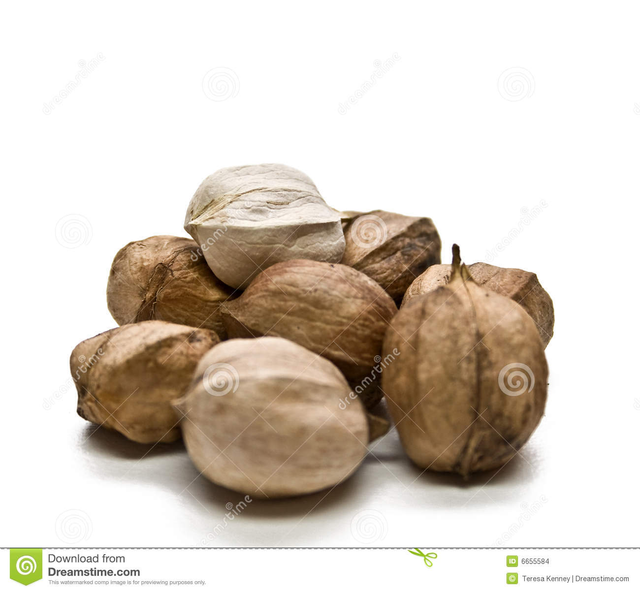 Hickory Nuts Stock Images Image 6655584