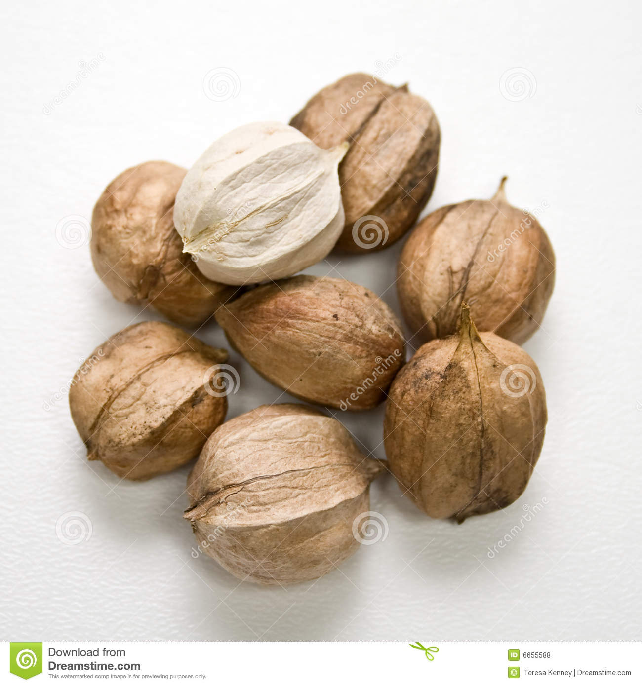 Stock Images similar to ID 201848935 - shagbark hickory nuts
