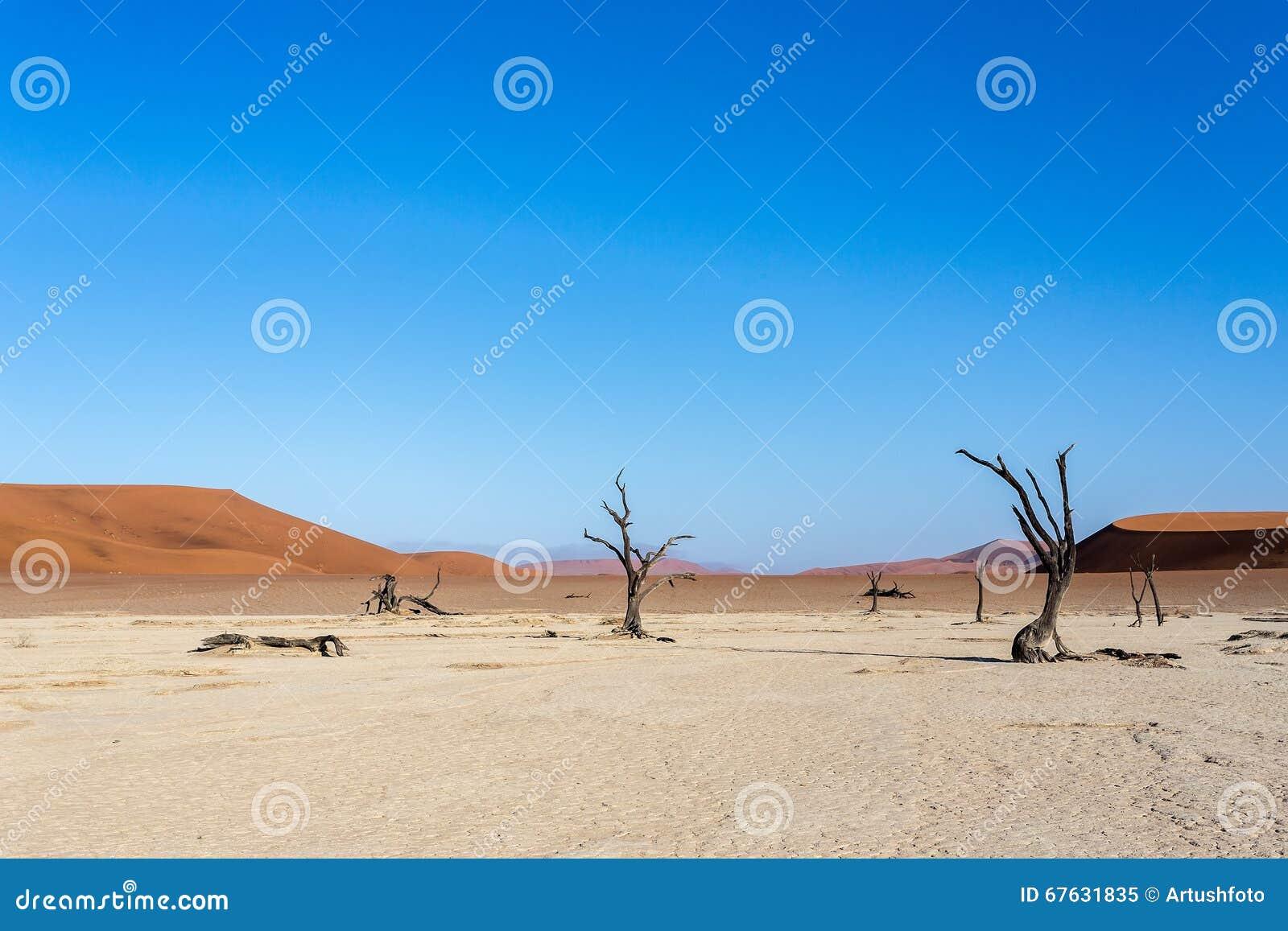 Hidden Vlei In Namib Desert Stock Image