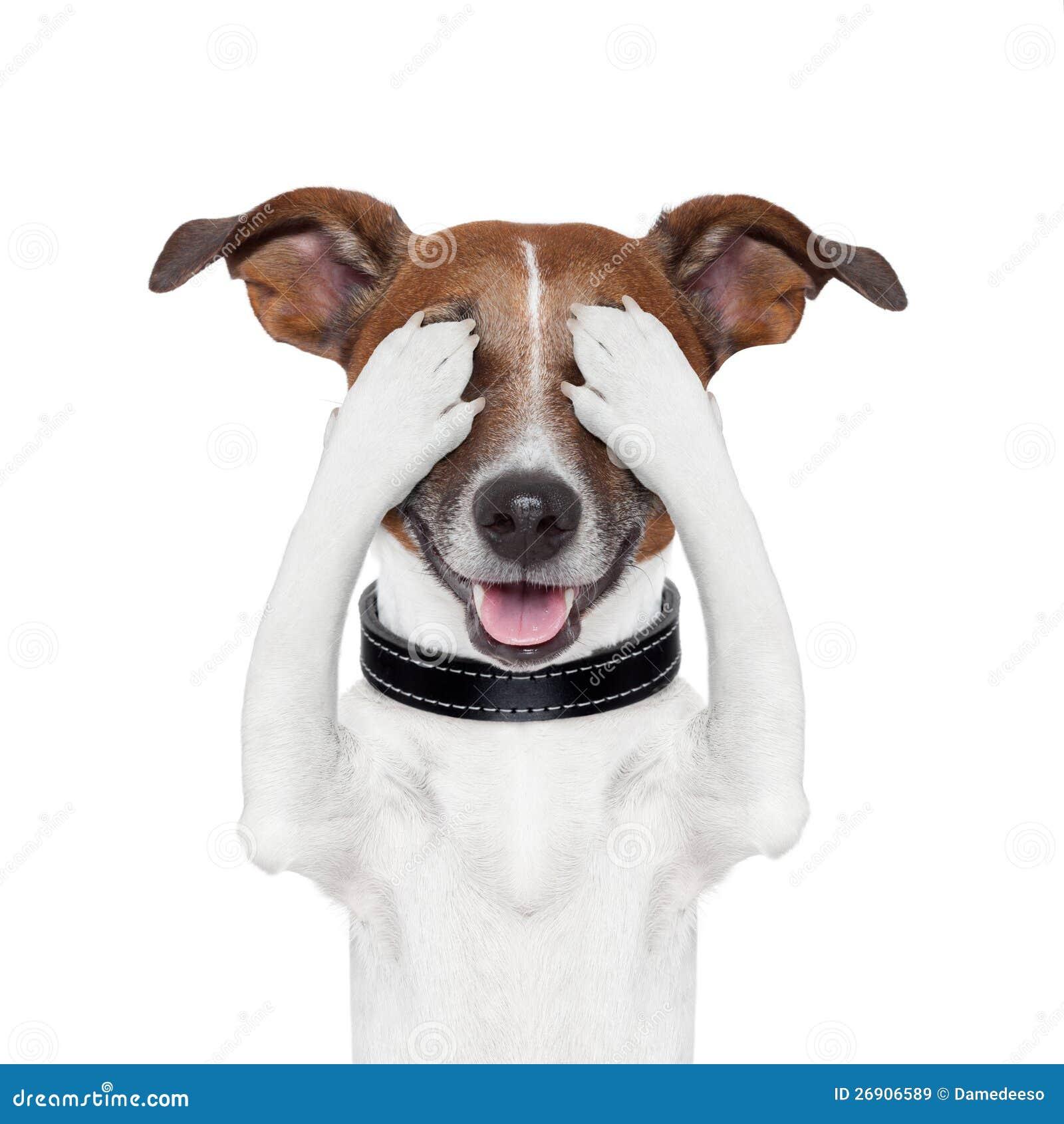Hiding Covering Eye Dog Stock Image Image Of Emotion
