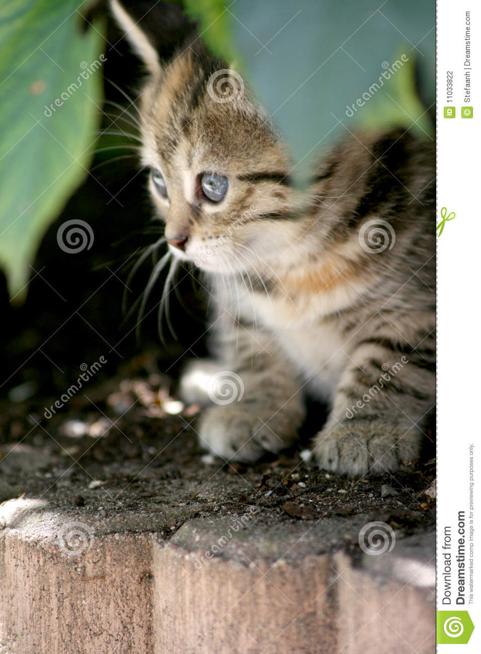 Hiding Kitten Stock Photo Image Of Small Brown Furry
