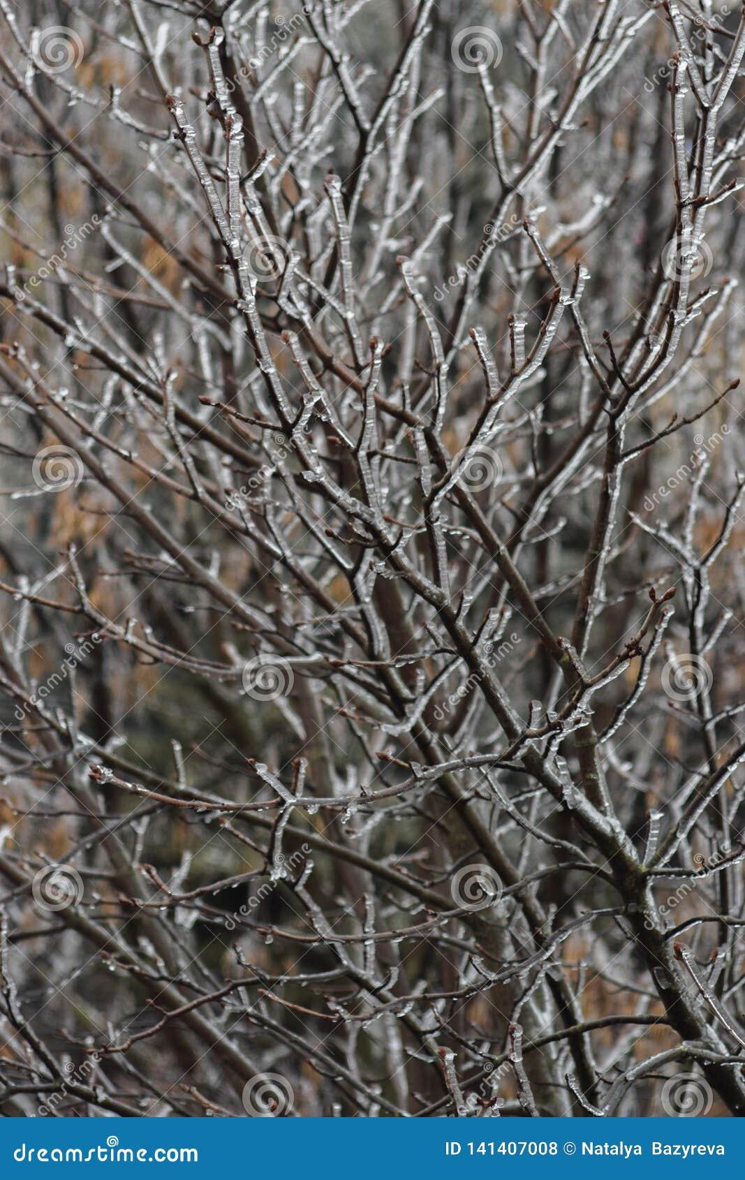 Hielo en las ramificaciones Árbol helado