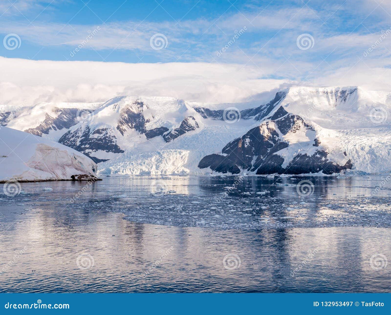 Hielo y glaciares impetuosos flotantes de Lester Cove y de Neko Harbor