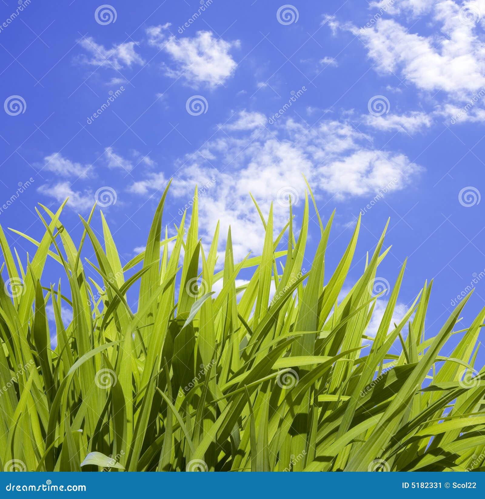 Hierba alta salvaje imagen de archivo imagen 5182331 - Cortar hierba alta ...