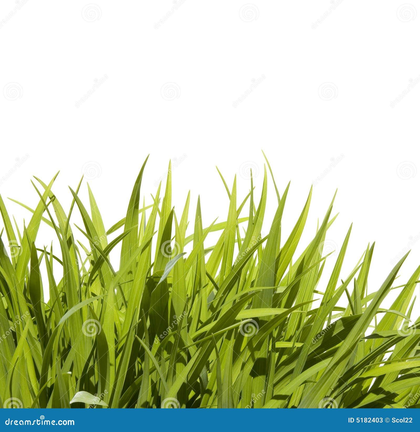 Hierba alta salvaje imagen de archivo imagen de frontera - Cortar hierba alta ...