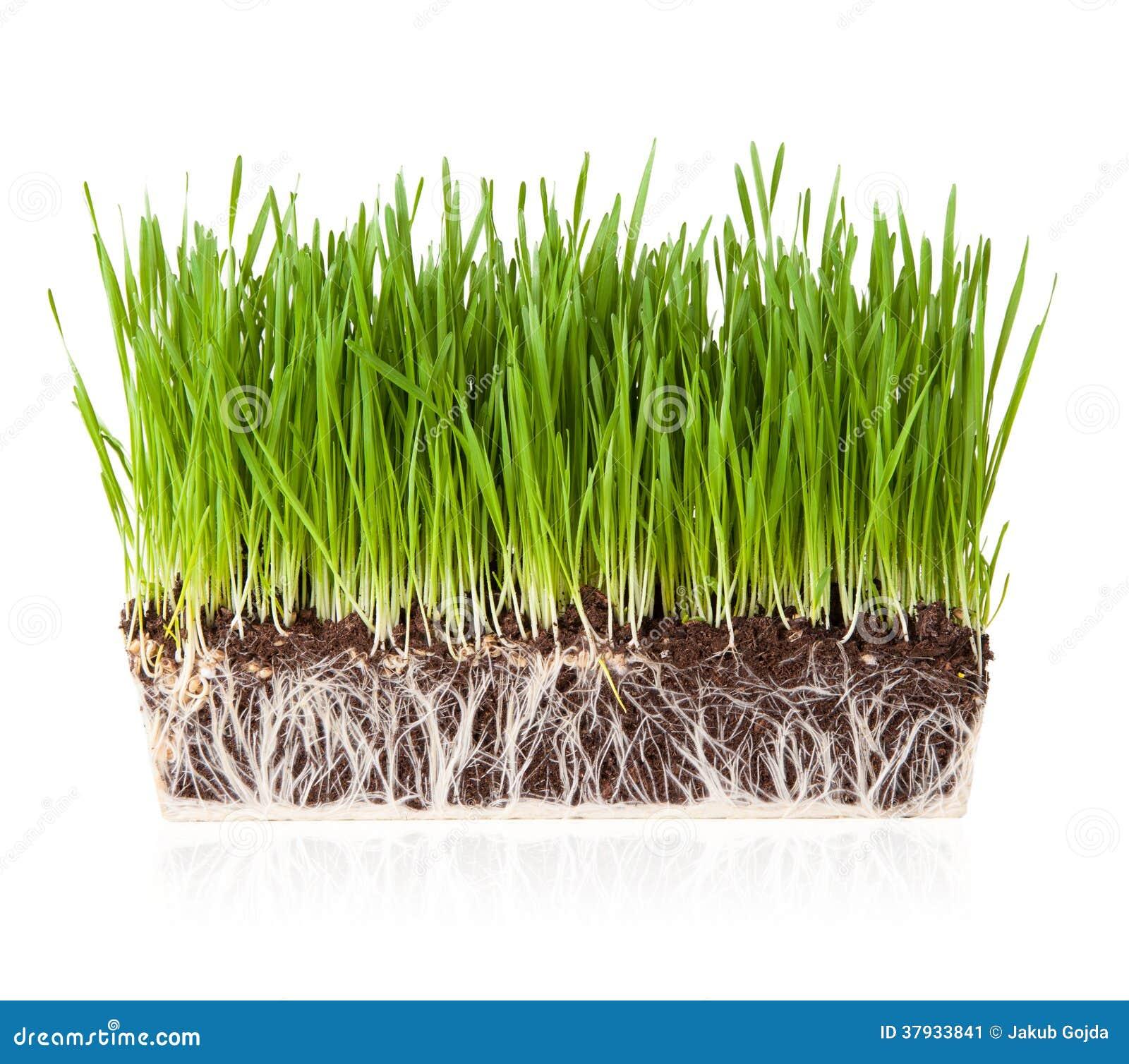 Hierba con tierra