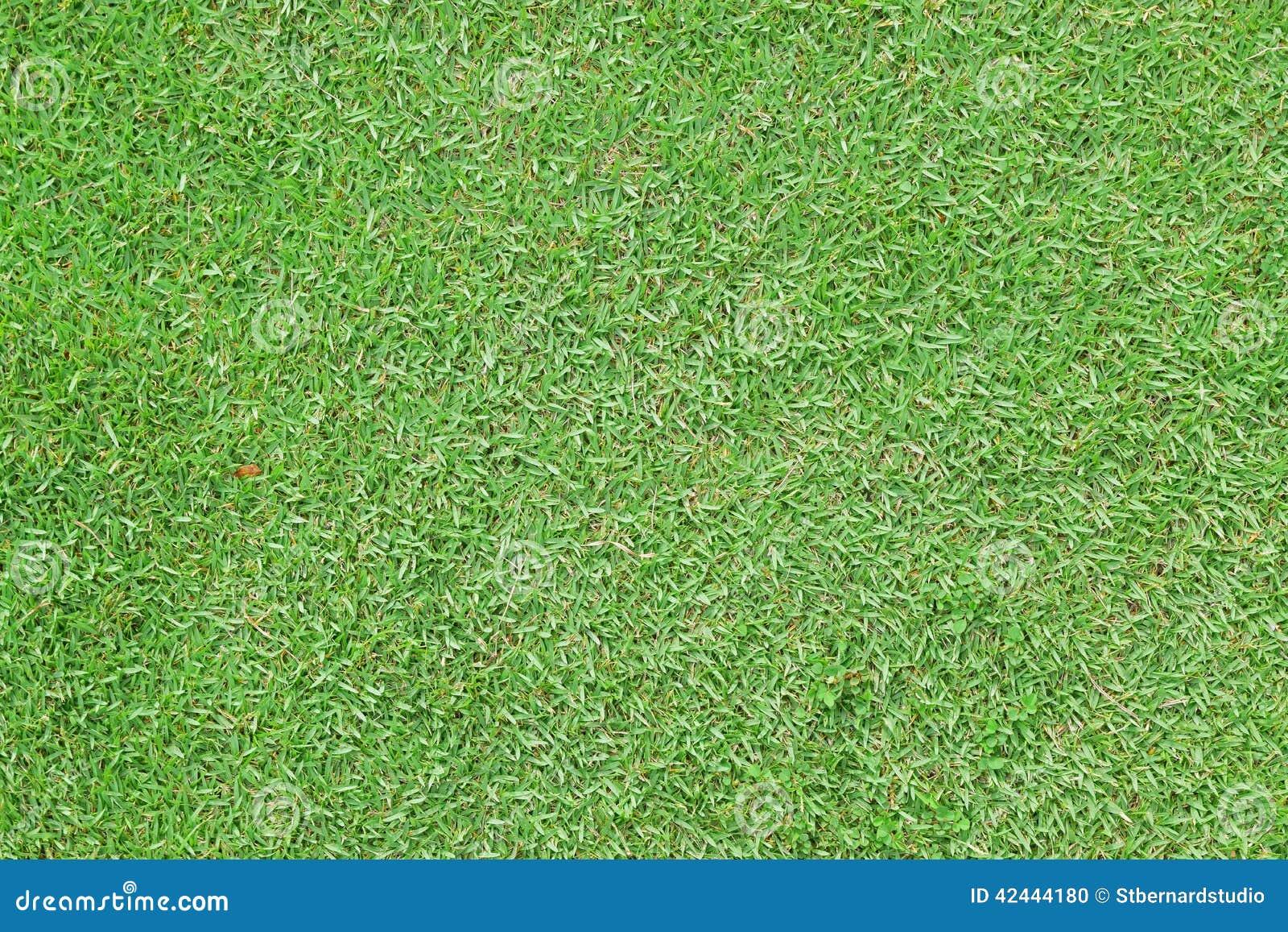 Hierba de alfombra verde