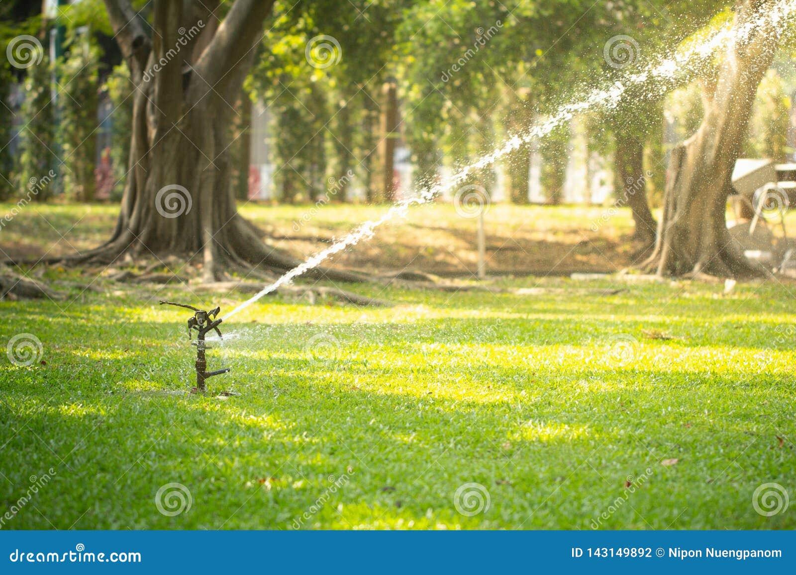 Hierba de riego de la regadera del césped en jardín bajo luz del sol