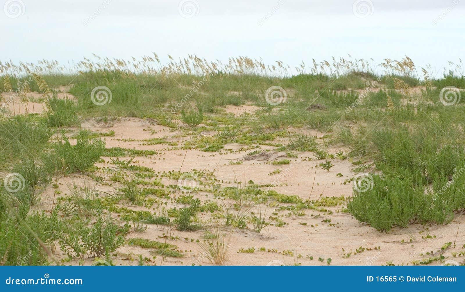 Hierba e hiedra en las dunas