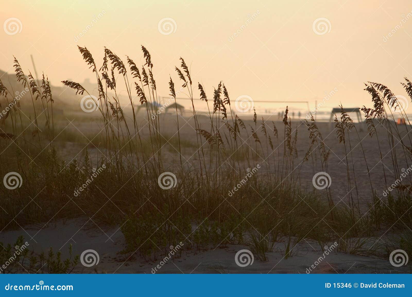 Hierba en las dunas