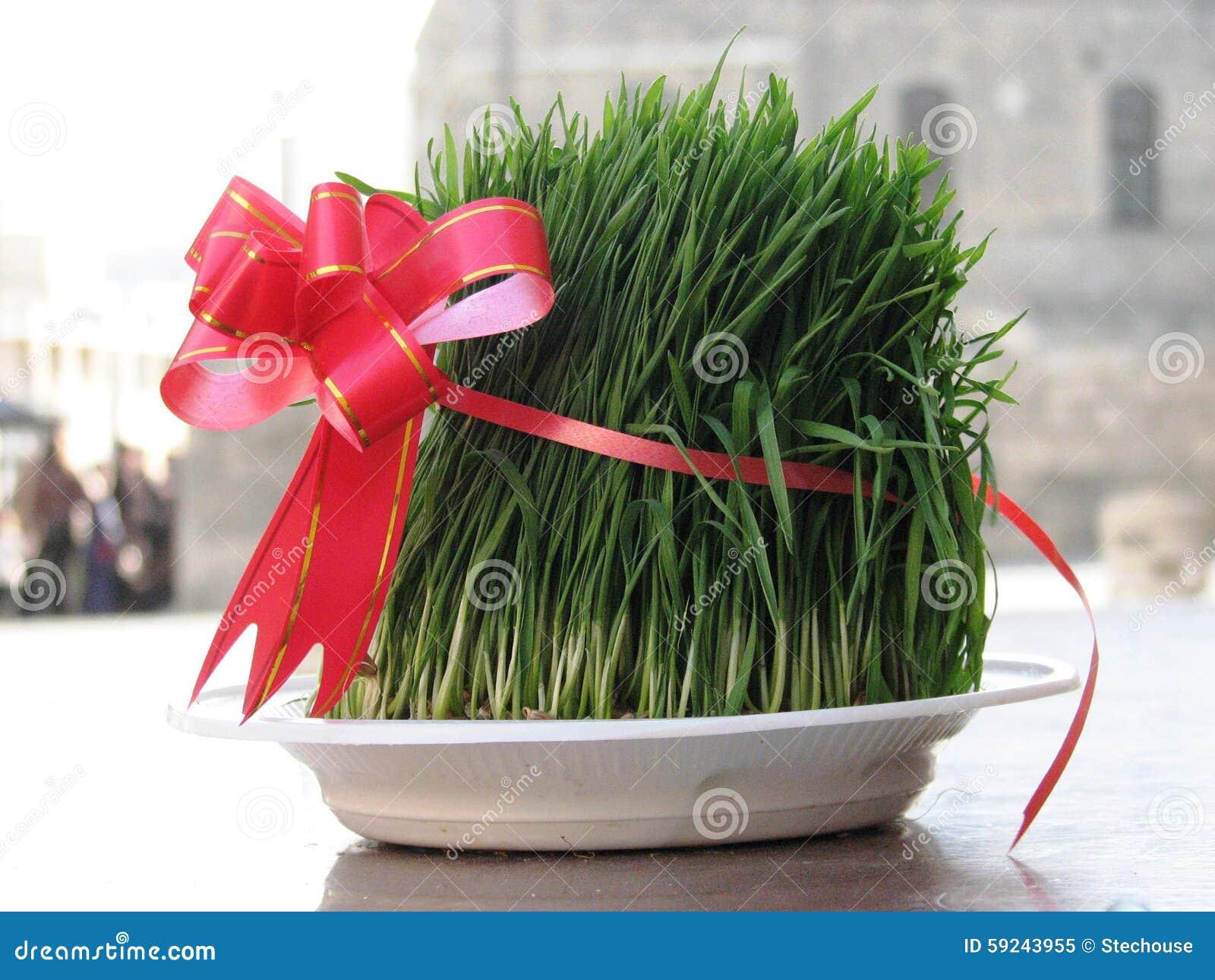 Download Hierba Festiva Del Trigo En Baku Azerbaijan Para Novruz Imagen de archivo - Imagen de jugo, vendido: 59243955