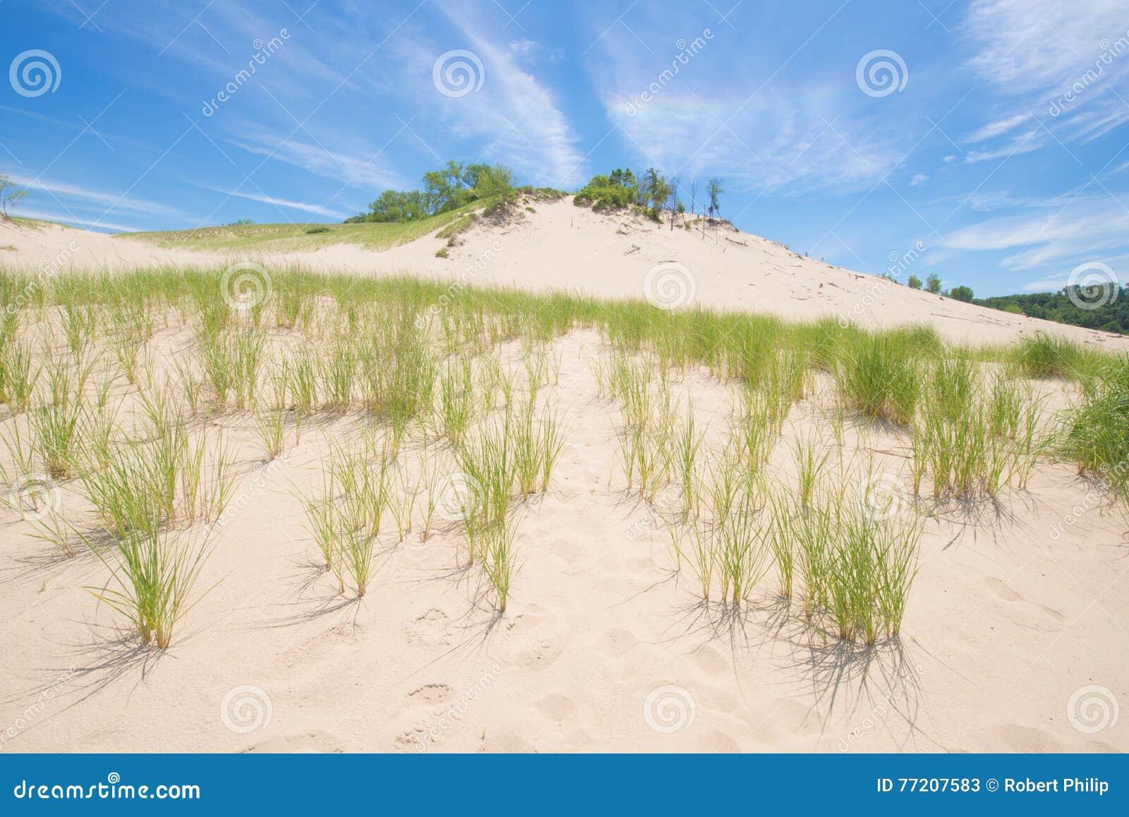 Hierba que crece en una duna de arena