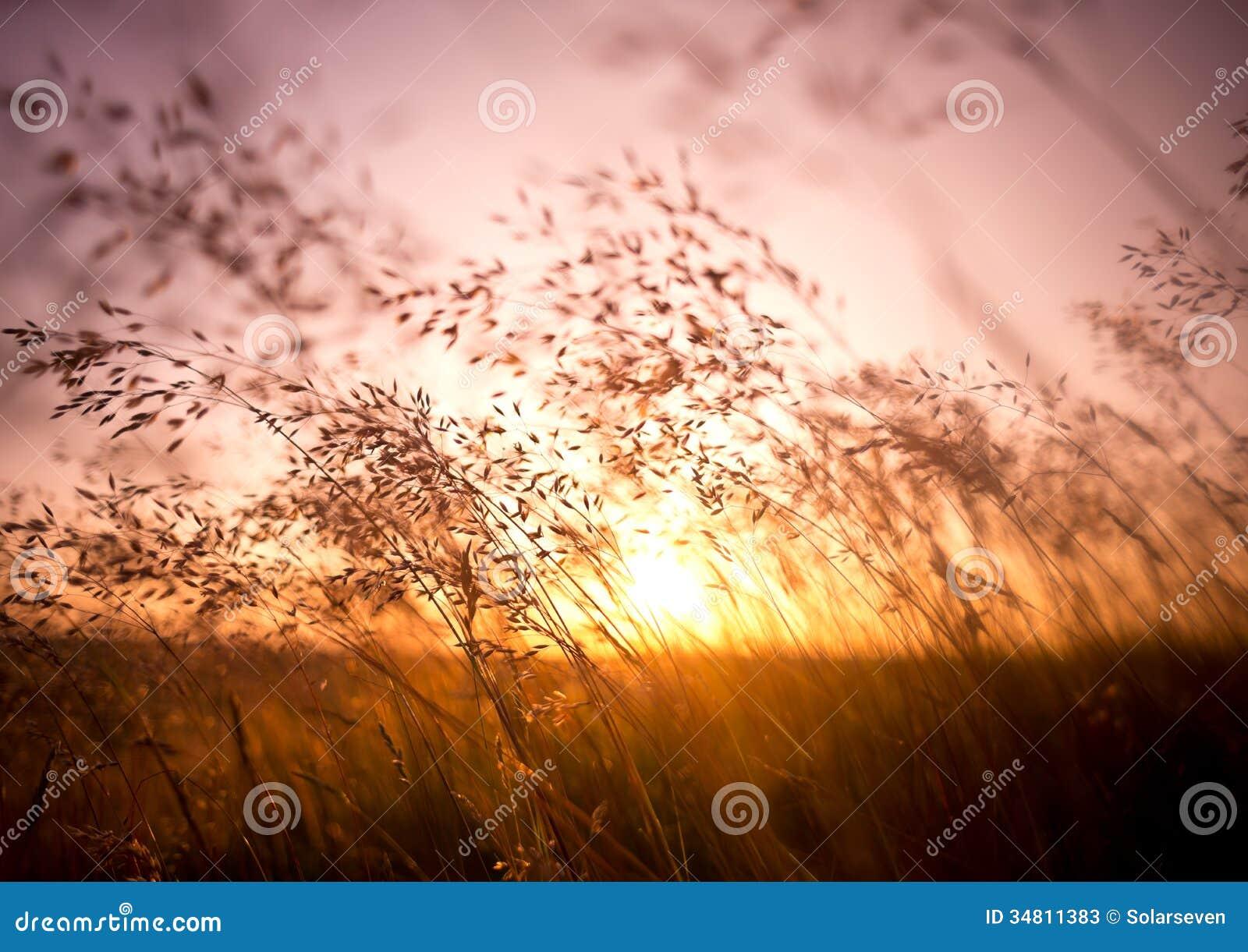 Hierba seca del verano