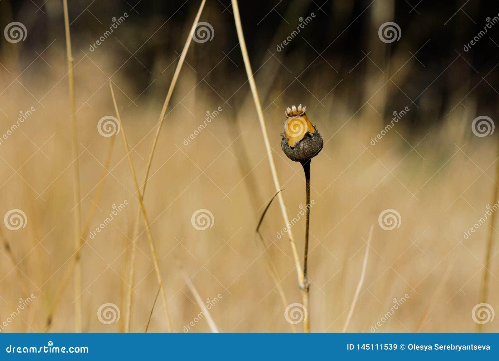 Hierba seca en fondo amarillo