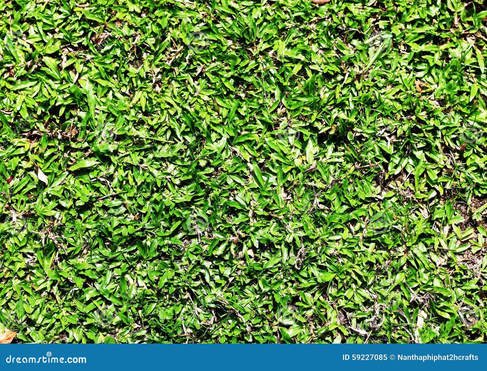 Download Hierba verde imagen de archivo. Imagen de contexto, limpio - 59227085