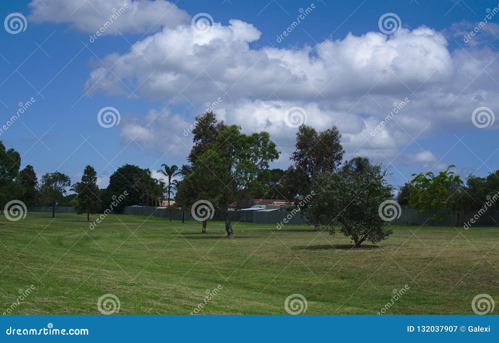 Hierba verde con algunos árboles
