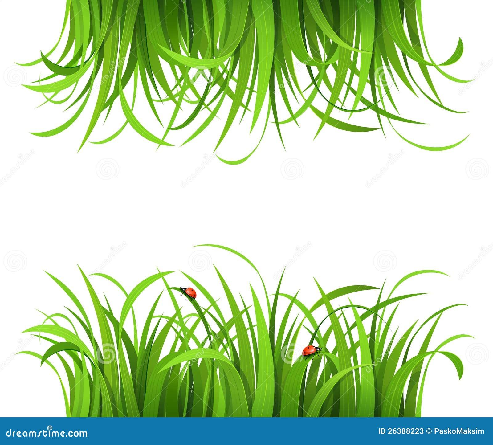 Hierba verde con las mariquitas