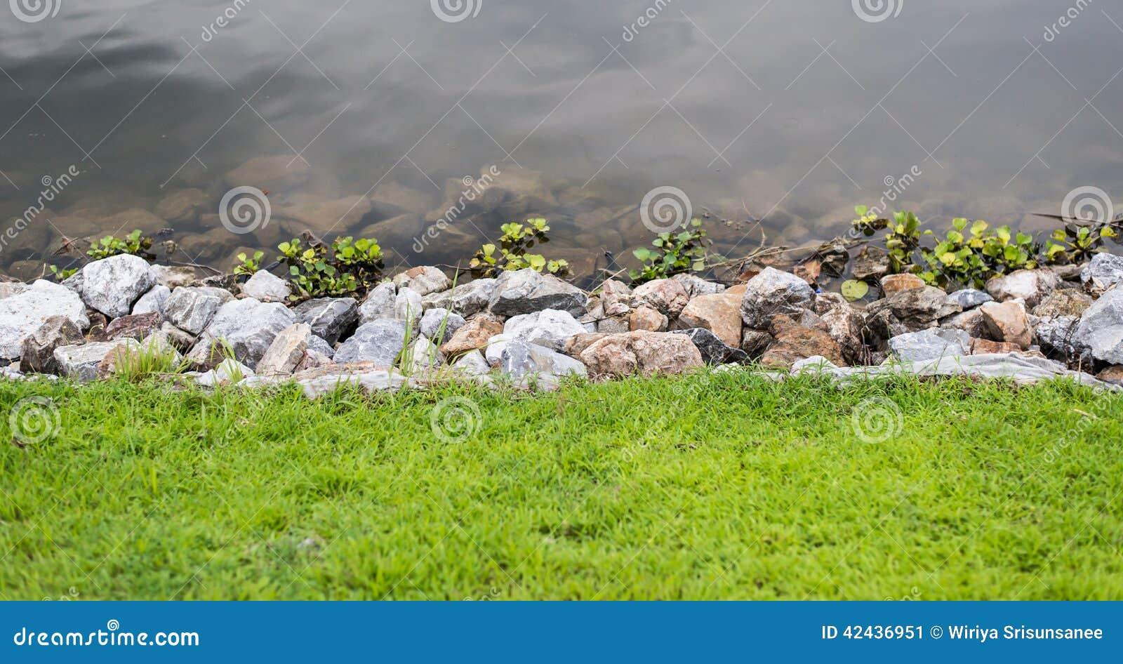 Hierba verde con las piedras y agua