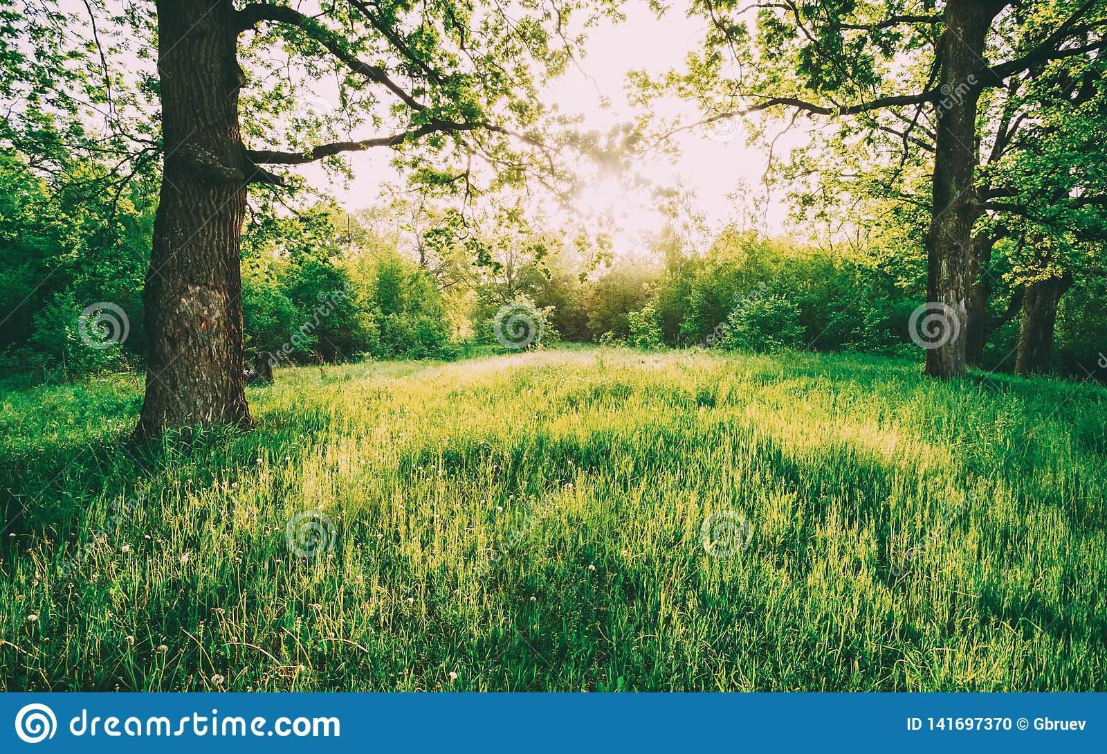Hierba verde de Sunny Deciduous Forest Trees And del verano Naturaleza, bosque en luz del sol