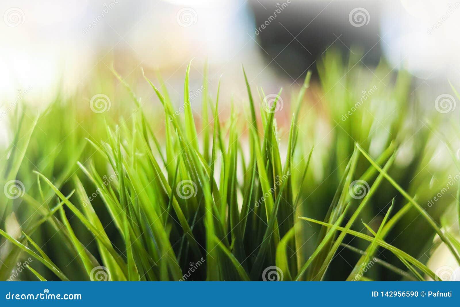 Hierba verde decorativa del primer interior