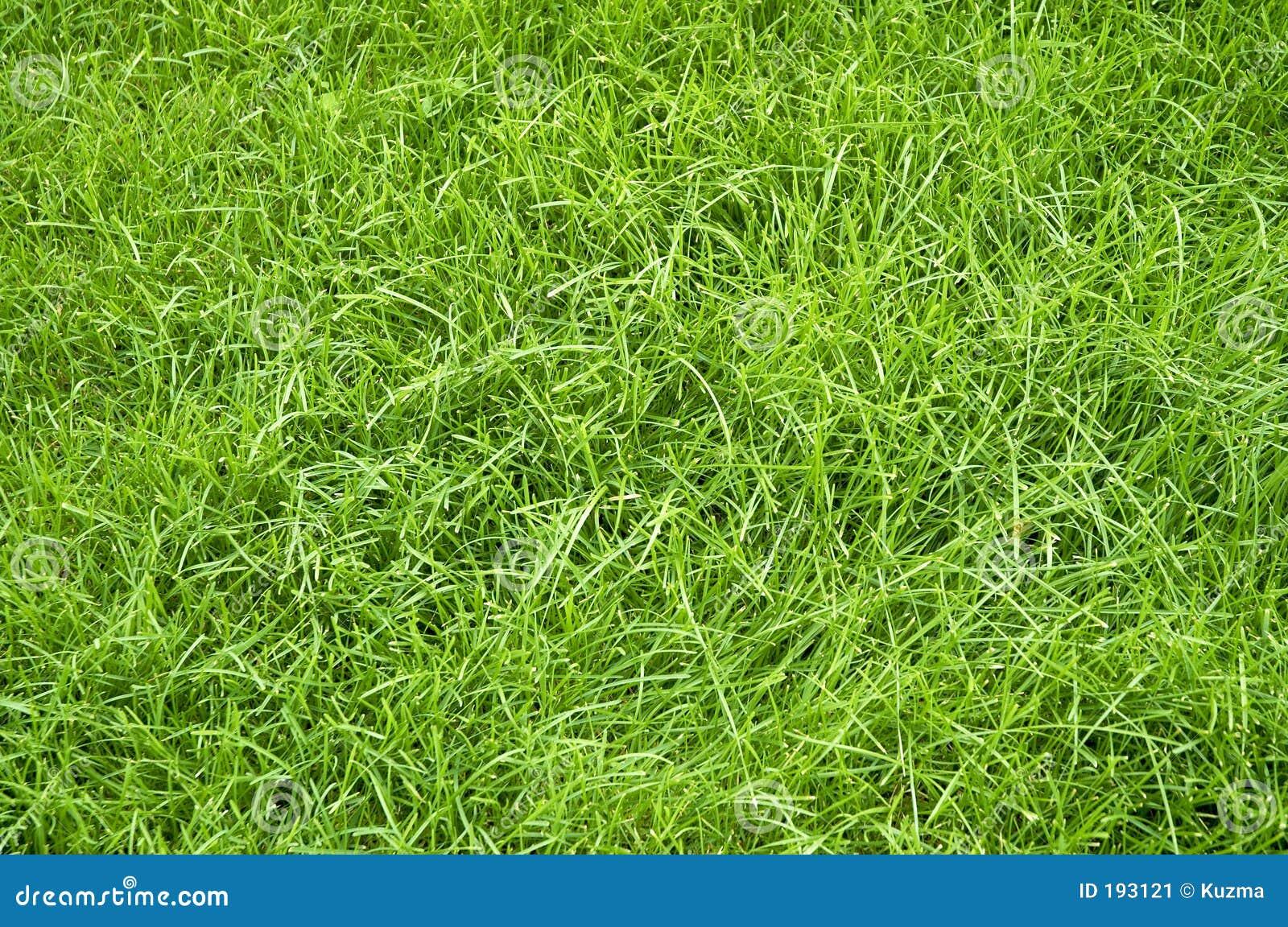 Hierba verde del verano
