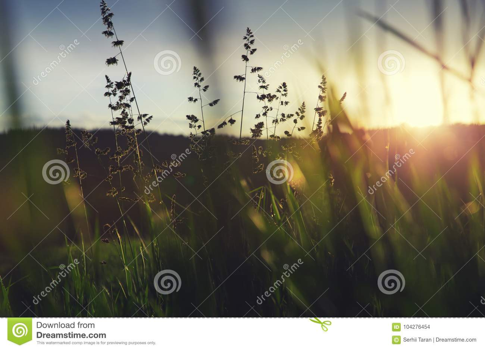 Hierba verde en puesta del sol
