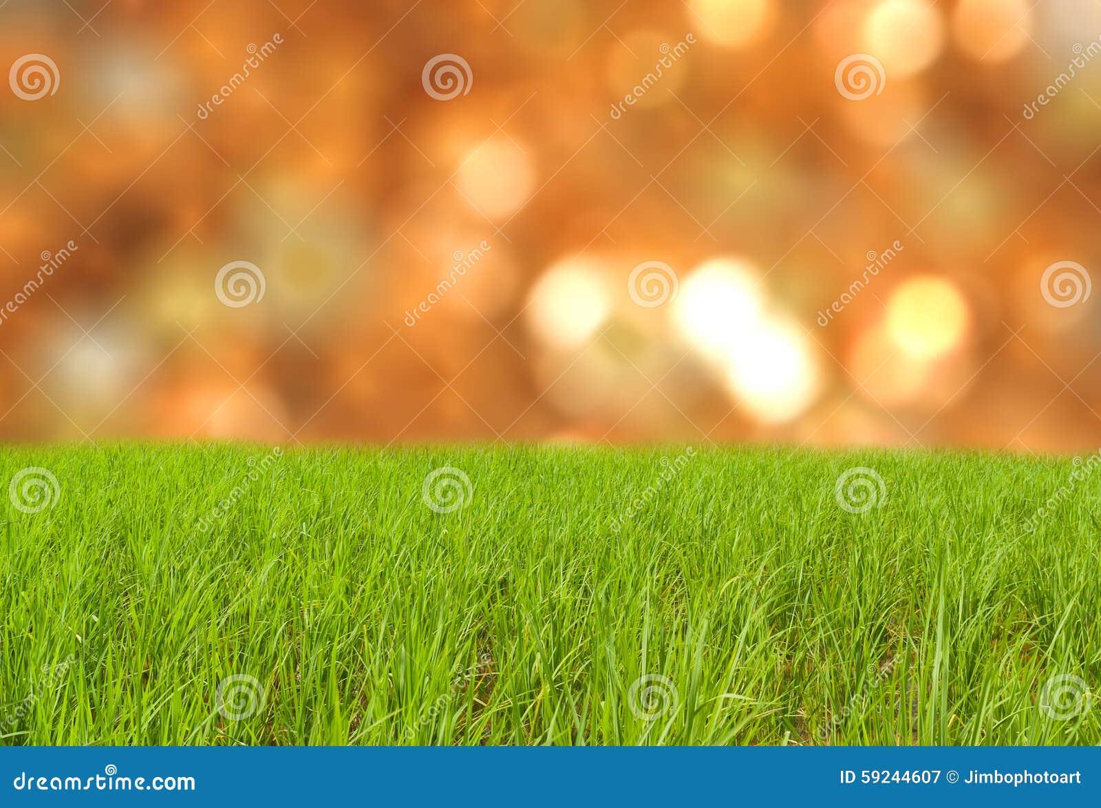 Hierba verde en tierra con la primavera