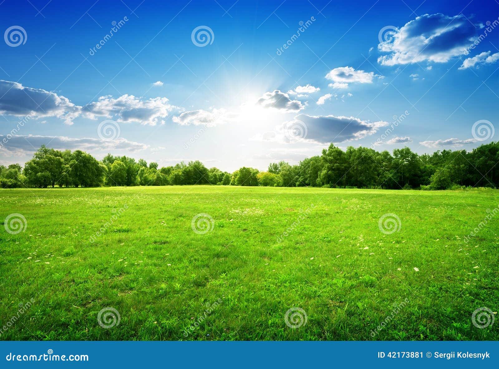 Hierba verde y árboles