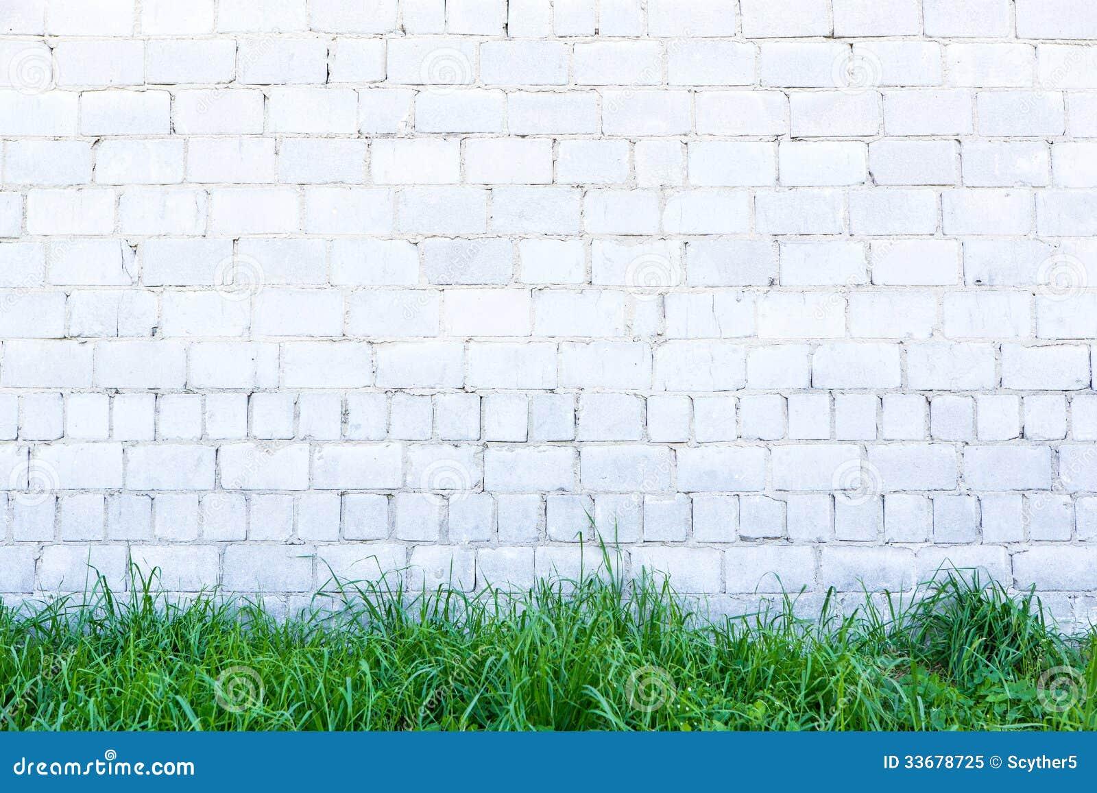 Hierba verde y pared blanca