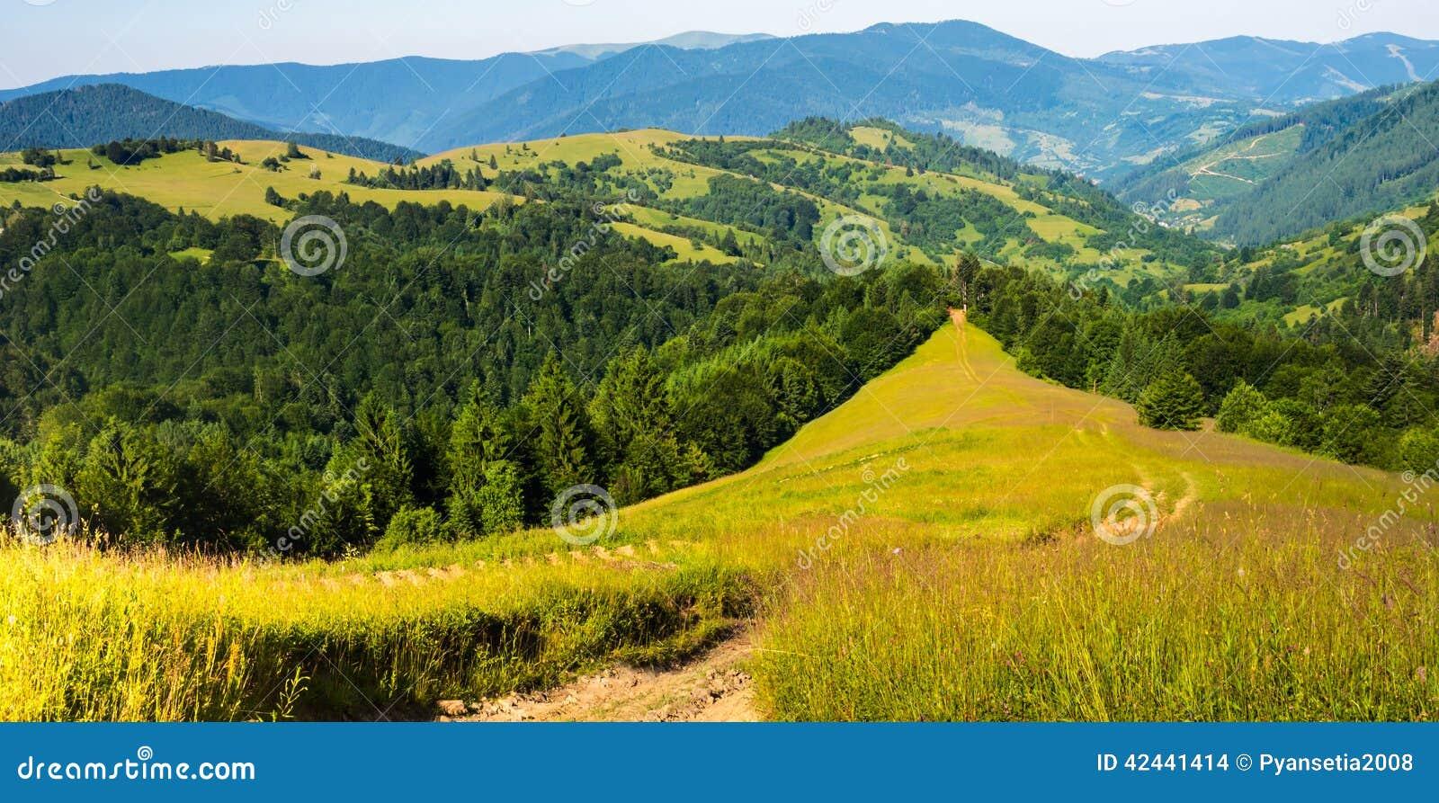 Hierba verde y una trayectoria en el bosque en el moun