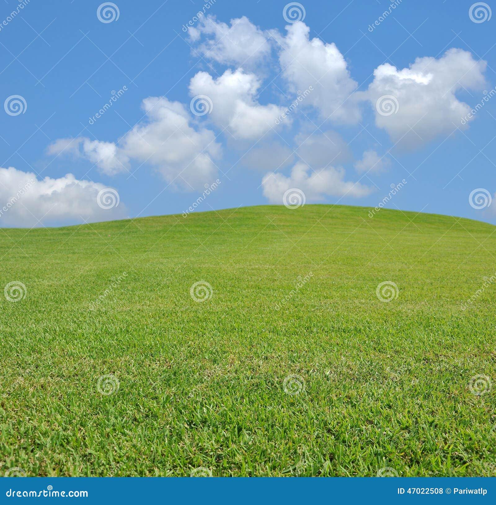 Hierba y cielo frescos