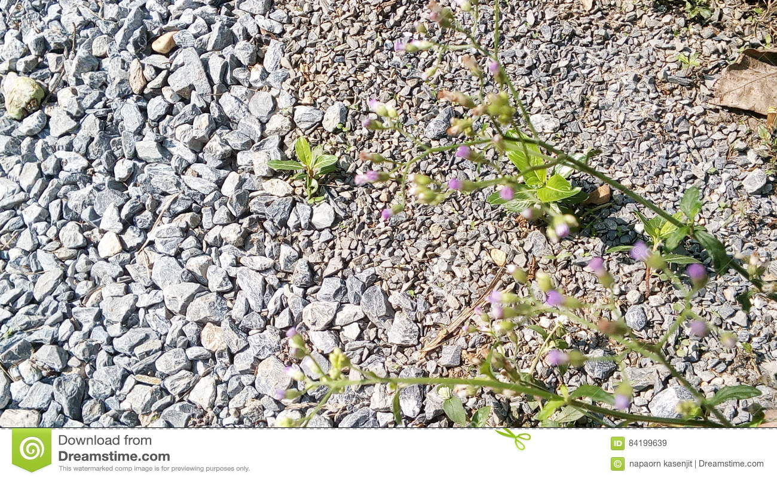 Hierba y flores blancas