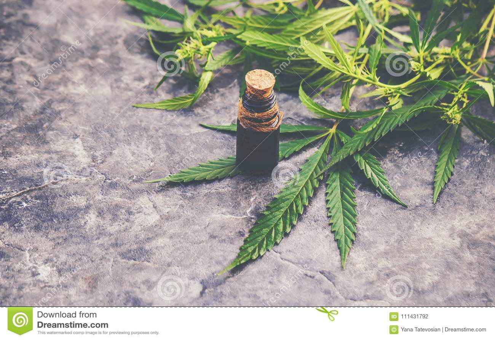Hierba y hojas del cáñamo para el caldo del tratamiento, tinte, extracto, aceite
