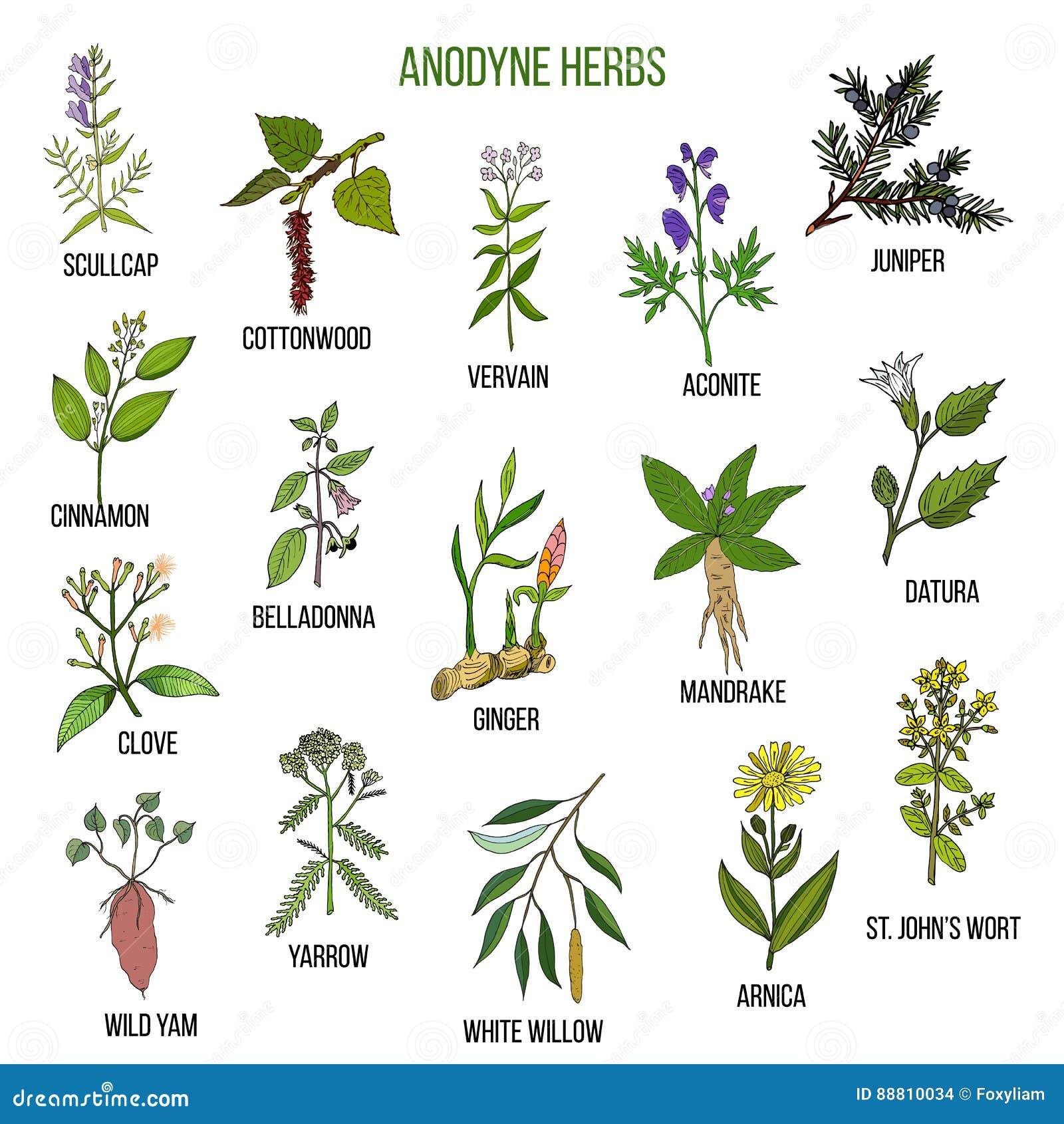 Hierbas anodinas sistema dibujado mano de plantas for Hierbas y plantas medicinales