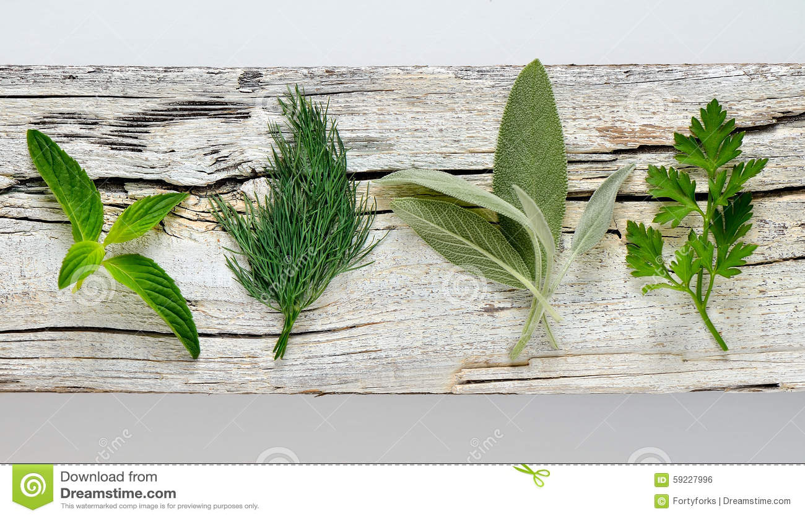Hierbas aromáticas culinarias