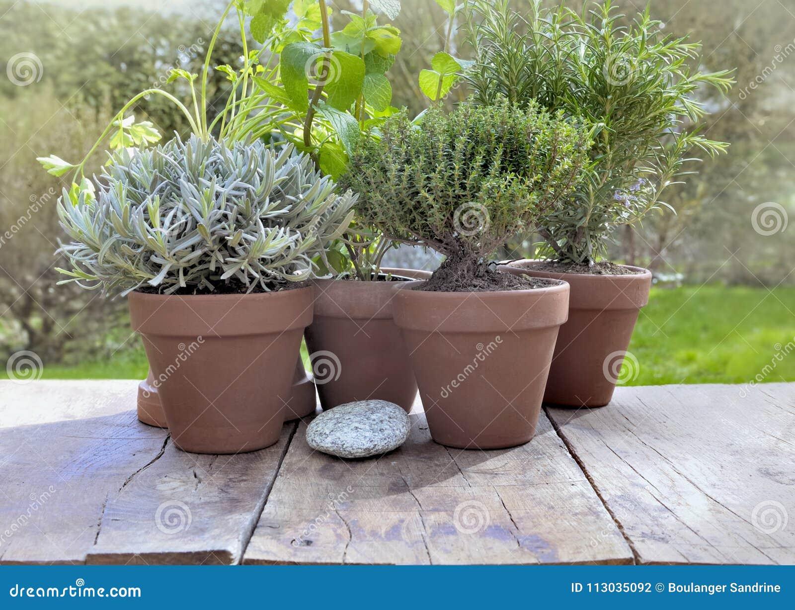 Hierbas aromáticas en conserva en jardín